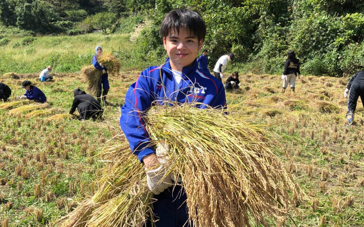 稲刈り体験が実施されました。
